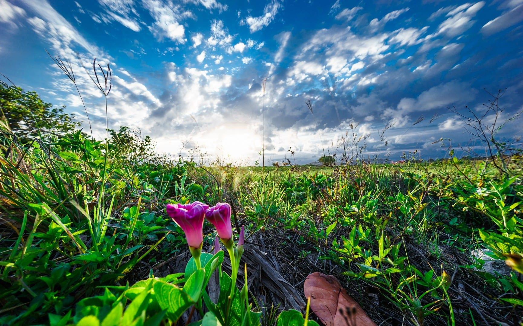 Flowers POV by Dmitry Bubis