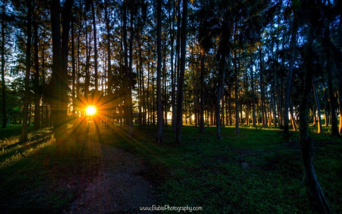 SunBurst - John Chesnut Park